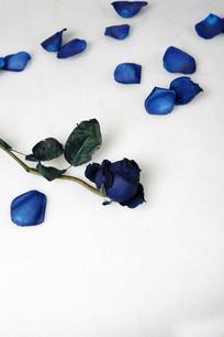 蓝色妖姬花摆拍