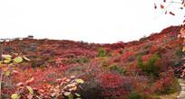 美丽的秋季景色-秋季红叶景观