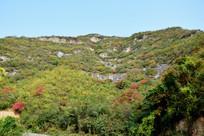 山峦上的彩色植被