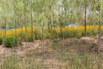 植物园景色