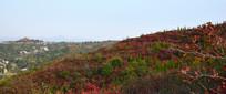 彩色植被覆盖的山岭