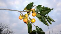 丰收的果实摄影图