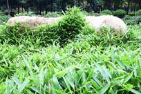 公园中的鹅毛竹