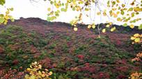 红绿相间的山坡景观