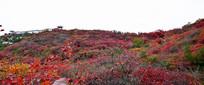 红色山岭秋季美景