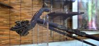 龙头拐杖图片