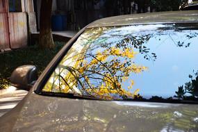 车窗上的蓝天黄色银杏叶