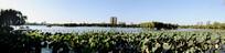 大明湖风景