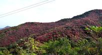 长寿山红叶景观
