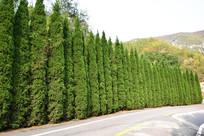 道路景观树摄影图