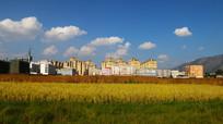 房子前边是希望的田野