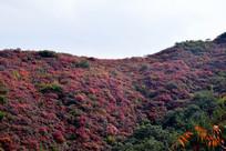 红色长寿山风景图
