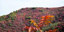 红色的山岭图片