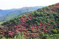 连绵的彩色山脉