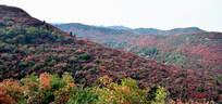 秋季的长寿山美景