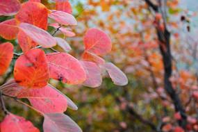 秋季景观摄影图
