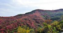 秋天里的彩色山岭