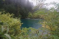 绿植环抱的湖泊