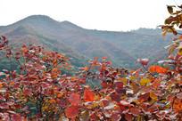 薄雾中的秋季山景