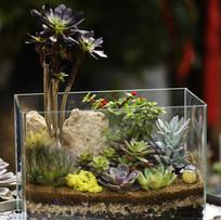 玻璃箱种植多肉植物组合