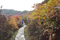彩色的秋季旅游摄影