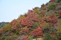 彩色植被的山坡图片