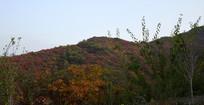彩色植被覆盖的山坡