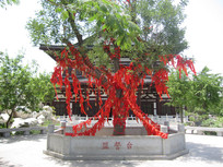 一颗挂满红丝带的树