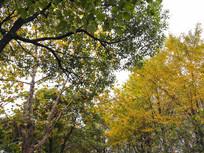 秋日五彩树叶图