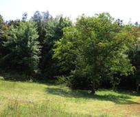 森林的一棵大树