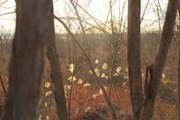 晚霞树林剪影透视树木摄影素材