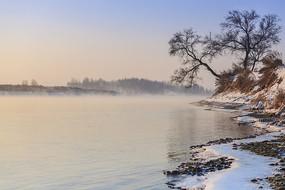 雾凇岛晨雾树木积雪