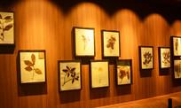 植物标本墙展示