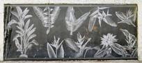 花草壁画艺术图片