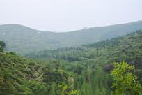 绿色的山脉摄影图