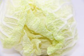 新鲜的白菜叶子
