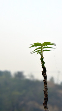 树木的嫩芽高清图