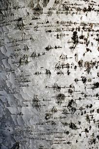 桦树皮底纹