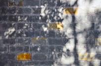 树影格子墙壁背景素材