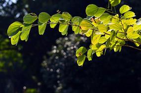 光影绿叶树枝特写图片