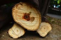 木桩树轮图片