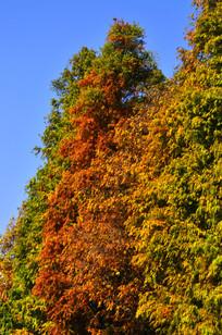 秋天的树木风景图片
