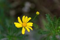 植物园的小黄花