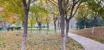 树林下的落叶景观图