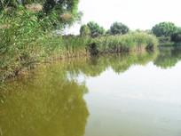 湖水和芦苇丛摄影图