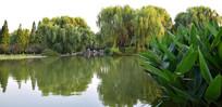绿色的公园景观摄影