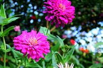 美丽的粉红花卉特写图