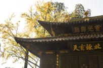 寺庙一角和银杏树