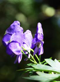 阳光下的紫色花朵