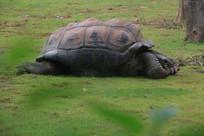 爬行的龟哥